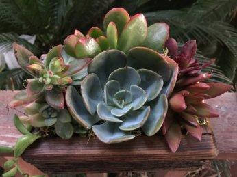 plant-2